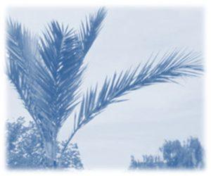Palmstaden